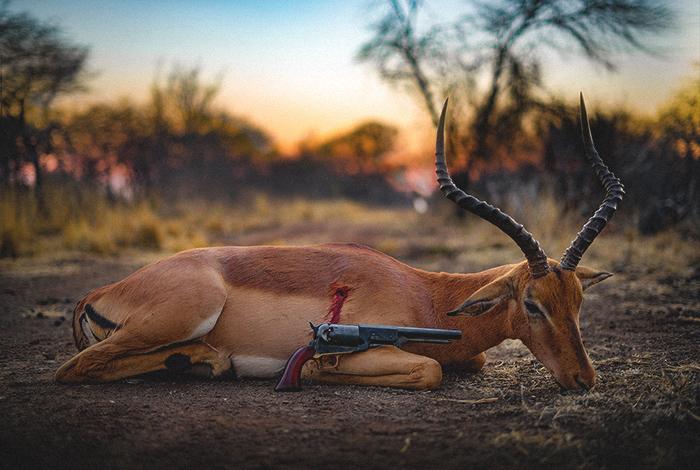 impala-titulka